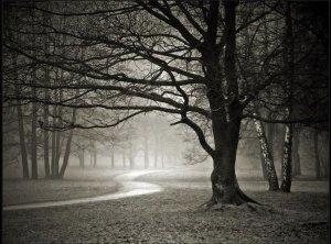 haunted-wood